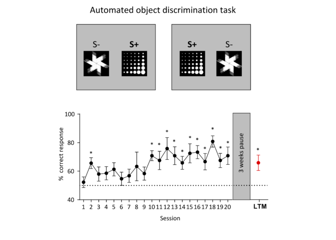 Learning Curve Object Discriminatiomn Task Mice