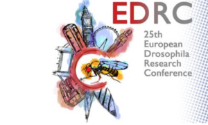 Drosophila conference Imperial EDRC 2017